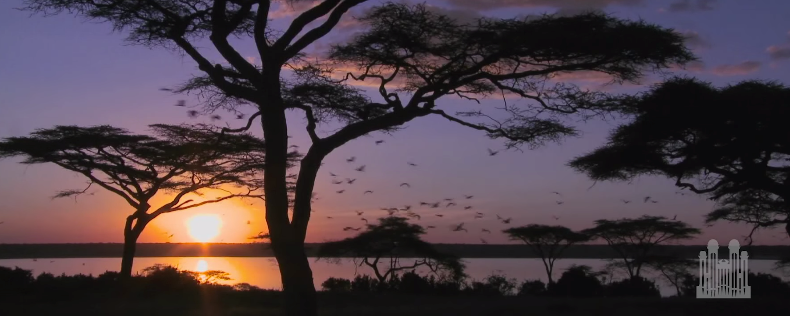 The_Cuckoo__Organ_solo__-_Mormon_Tabernacle_Choir_-_YouTube.png