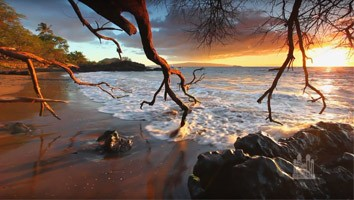 New Year's Special (January 1, 2017) - #4555 Music and the Spoken Word